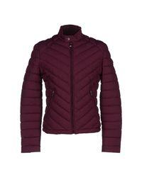 Guess Purple Jacket