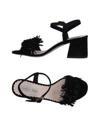 Tosca Blu Black Sandals