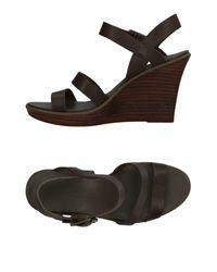 Timberland Gray Sandals