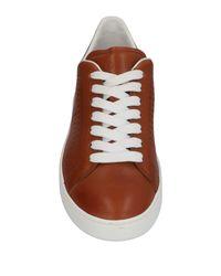 Tod's Brown Low-tops & Sneakers