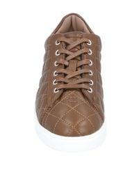 Gianvito Rossi Brown Low Sneakers & Tennisschuhe