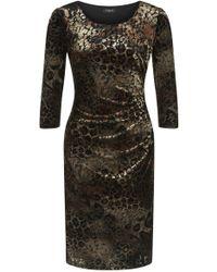 Precis Petite Animal Print Velvet Dress - Brown