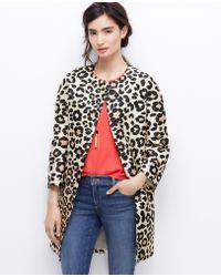 Ann Taylor Tall Spring Leopard Coat - Lyst