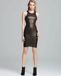 Torn By Ronny Kobo Dress Shiran Lace - Black