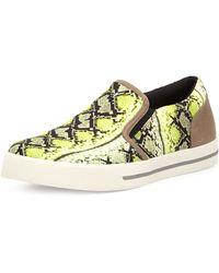 Just Cavalli Mens Snakeprint Canvas Sneaker - Lyst
