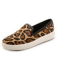 Sam Edelman - Becker Slip On Sneakers - New Nude Leopard/Black - Lyst