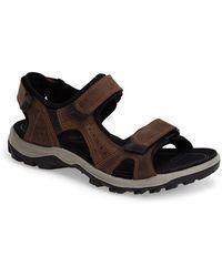 Ecco 'Cheja' Sandal brown - Lyst