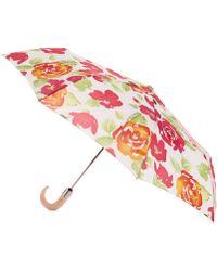 Dooney & Bourke Dooney and Bourke Floral Umbrella - Multicolor