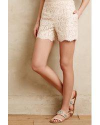 Cartonnier - Scalloped Lacework Shorts - Lyst