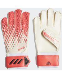 adidas Predator 20 Match Handschoenen - Meerkleurig