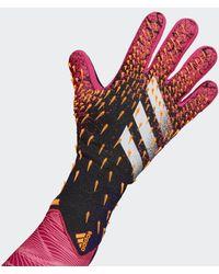 adidas Predator Pro Torwarthandschuhe - Pink