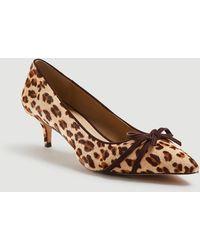 Ann Taylor D'andrea Leopard Print Haircalf Bow Court Shoes - Brown