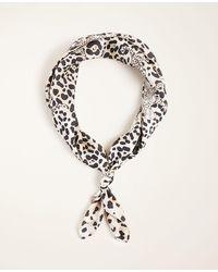 Ann Taylor Leopard Print Silk Little Scarf - Multicolour