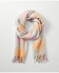 Ann Taylor Brushed Check Blanket Scarf - Pink