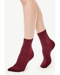 Ann Taylor Refined Crew Socks - Red