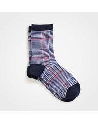 Ann Taylor Plaid Trouser Socks - Blue