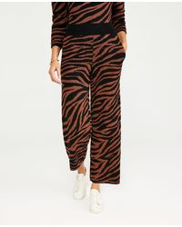 Ann Taylor The Animal Print Sweater Pant - Brown