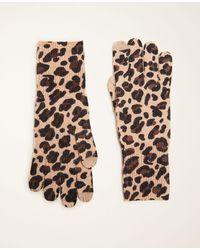 Ann Taylor Cheetah Print Cashmere Gloves - Natural