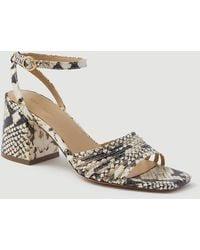Ann Taylor Estelle Snake Print Leather Strappy Block Heel Sandals - Multicolour