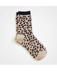 Ann Taylor - Spotted Trouser Socks - Lyst