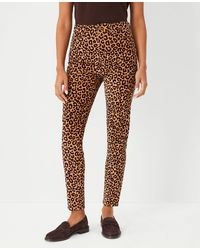 Ann Taylor The Animal Print High Rise Skinny Corduroy Pant - Multicolour
