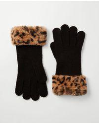 Ann Taylor Leopard Print Faux Fur Trim Gloves - Black