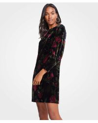 Ann Taylor - Petite Cuffed Floral Velvet Shift Dress - Lyst