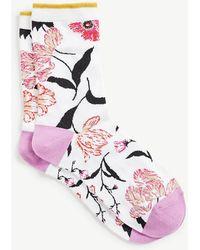 Ann Taylor Botanical Trouser Socks - White