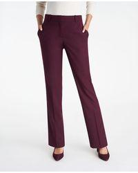 Ann Taylor The Straight Pant - Purple