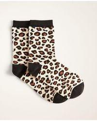 Ann Taylor Leopard Print Trouser Socks - Brown