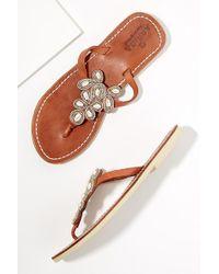 Aspiga - Mia Beaded-leather Sandals - Lyst