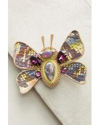 Beavaldes - Bloom Butterfly Brooch - Lyst