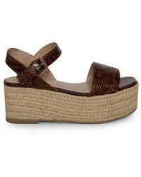Miss Selfridge Chaussures chunky à plateforme - Marron