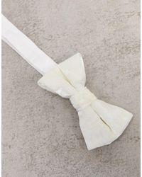 Twisted Tailor Velvet Bow Tie - Multicolour