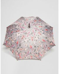 Cath Kidston - Kensington 2 British Birds Grey Umbrella - Lyst