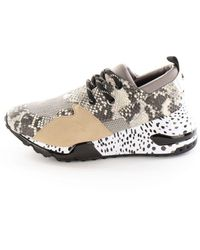 Steve Madden Cliff Shoes Natural - Brown
