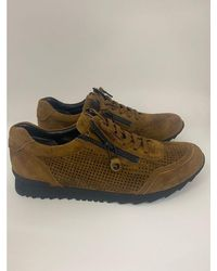 Kennel & Schmenger Hazel Suede Sneaker With Swarovski Crystals 81-18300-609 - Multicolour