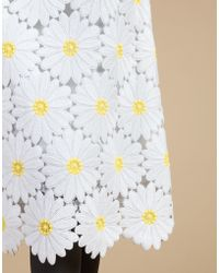 Dolce & Gabbana | A-line Lace Skirt With Daisy Embroidery | Lyst