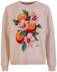 CASABLANCA Orange Blossom Intarsia Knit Jumper - Multicolour
