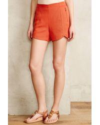 Cartonnier - Twill Tulip Shorts - Lyst