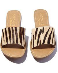 Matisse Zebra Cabana Sandals - Multicolour