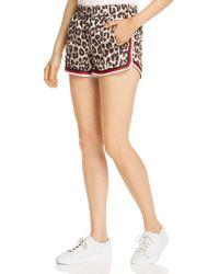 Pam & Gela Dolphin Leopard Print Shorts - Multicolour