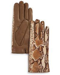 Bloomingdale's Python Printed Leather Gloves - Brown