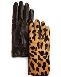 Bloomingdale's - Leopard Cashmere & Calf Hair Gloves - Lyst