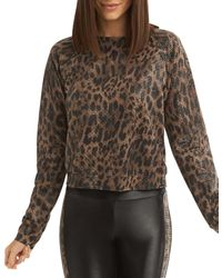 Koral Sofia Pullover Top - Brown