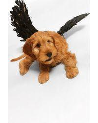 Boohoo Halloween Pet Angel Wings - Black