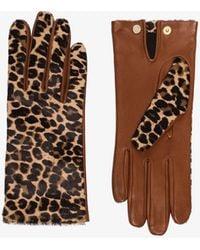 Agnelle Chloe Leopard-print Leather Gloves - Brown
