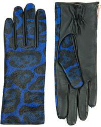 Ted Baker Leopard Print Gloves - Blue