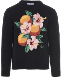 CASABLANCA Orange Floral Intarsia Knit Jumper - Black