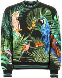Dolce & Gabbana Jungle Parrot Sweatshirt - Green
